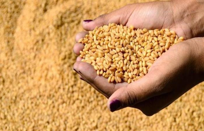 إقتصاد : إنفوجرافيك.. إصدار رخص التحول لزراعة القمح بدلاً الأعلاف إلكترونياً بالسعودية