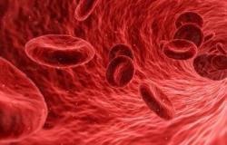 صحة : فيروس كورونا قد يستهدف النخاع ويمنع تكوين كريات الدم الحمراء الجديدة
